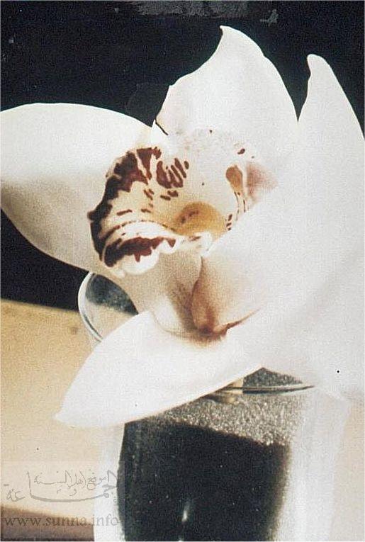 Name Allah flower Name_of_Allah_on_a_flower.jpg