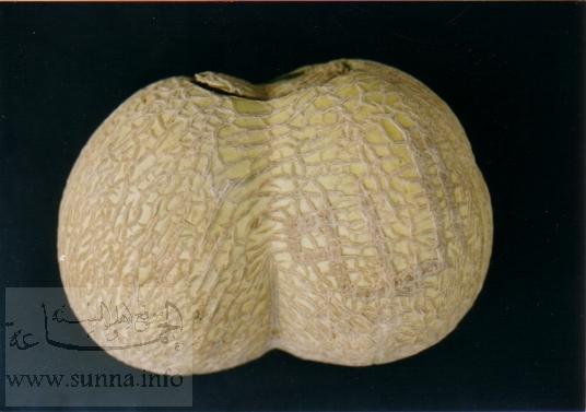 نام مبارك الله كه توسط رگه های روی پوست یك میوه تشكیل شده است