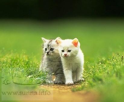 Quel est votre animal préféré ? Cats
