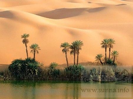 صور خلابة من صحراء الجزائر waha.jpg