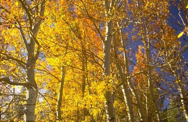 صور اشجار الخريف